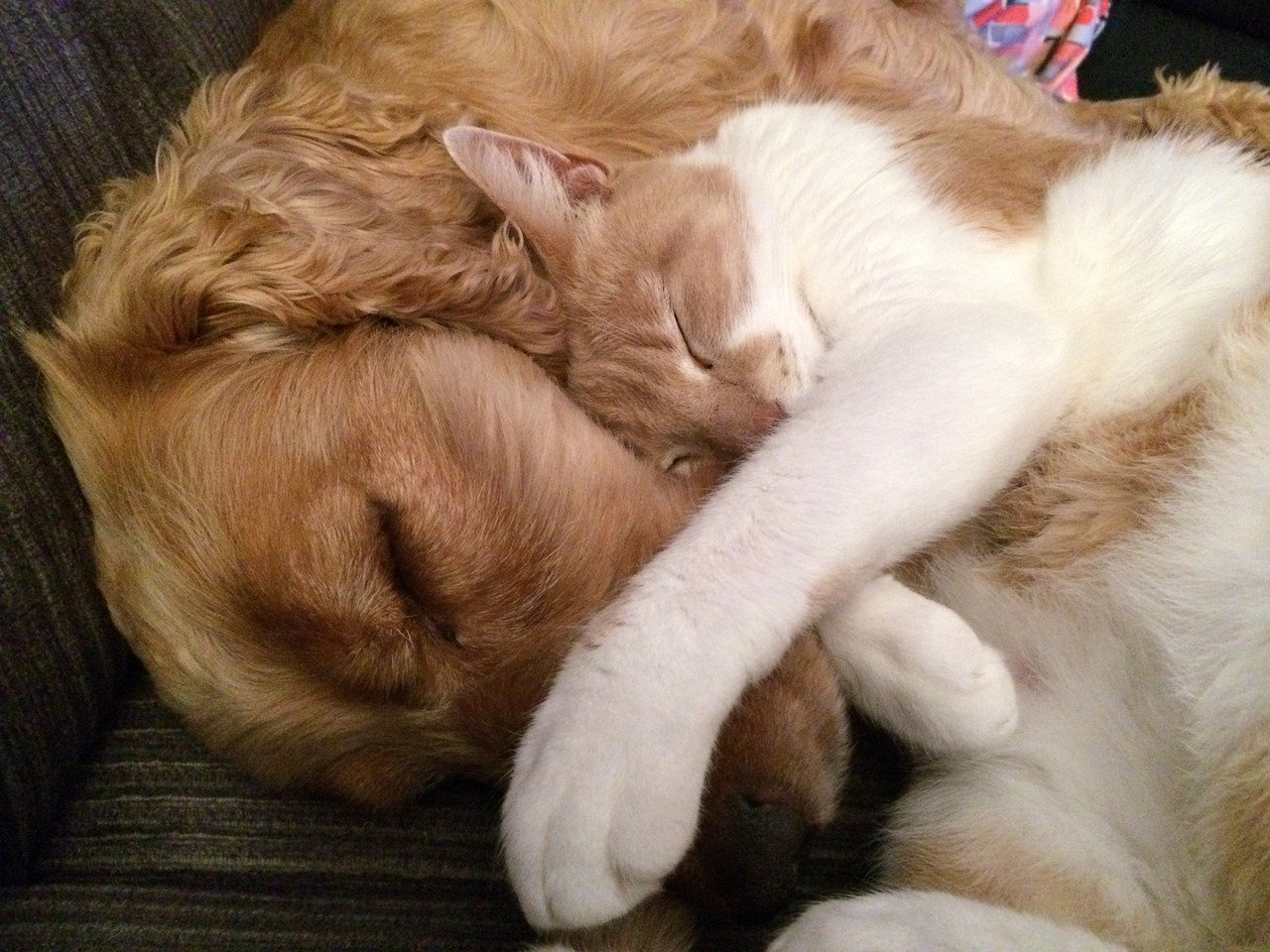 Cão e gato dormindo juntos