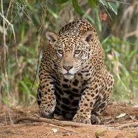 Algumas das mais de 3.000 espécies de animais e plantas ameaçadas no Brasil
