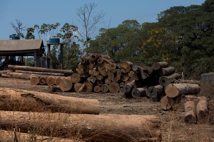 Toras de madeira são vistas em serraria no km 180 da rodovia BR 230, Transamazônica. (Foto: Bruno Kelly/Amazônia Real/08/08/2020)