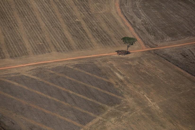 Imagem aérea de área preparada para monocultura ou pecuária, próximo a Porto Velho. 07 de agosto de 2020. (Foto Bruno Kelly/Amazônia Real)