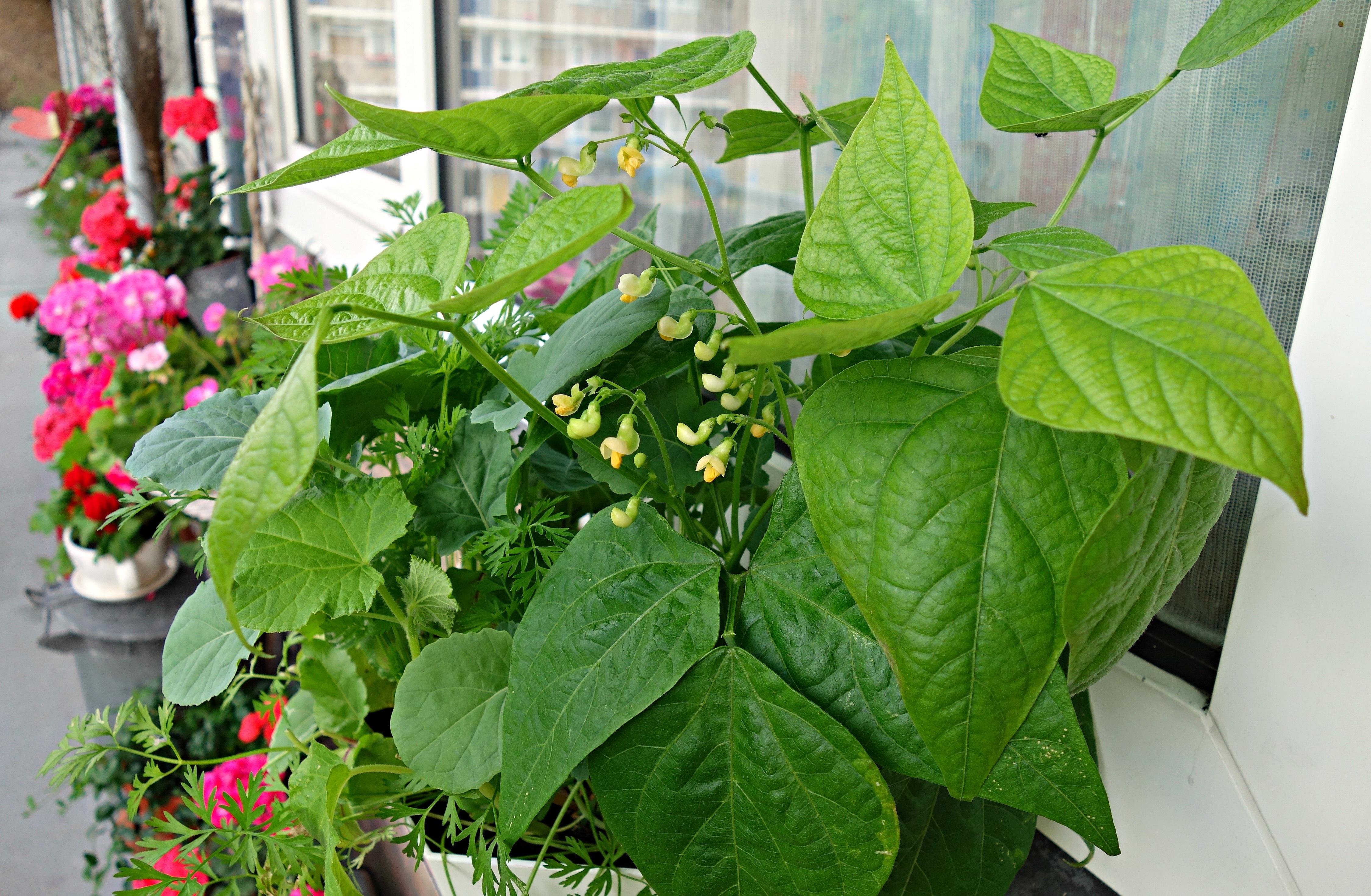 Plantas em varanda