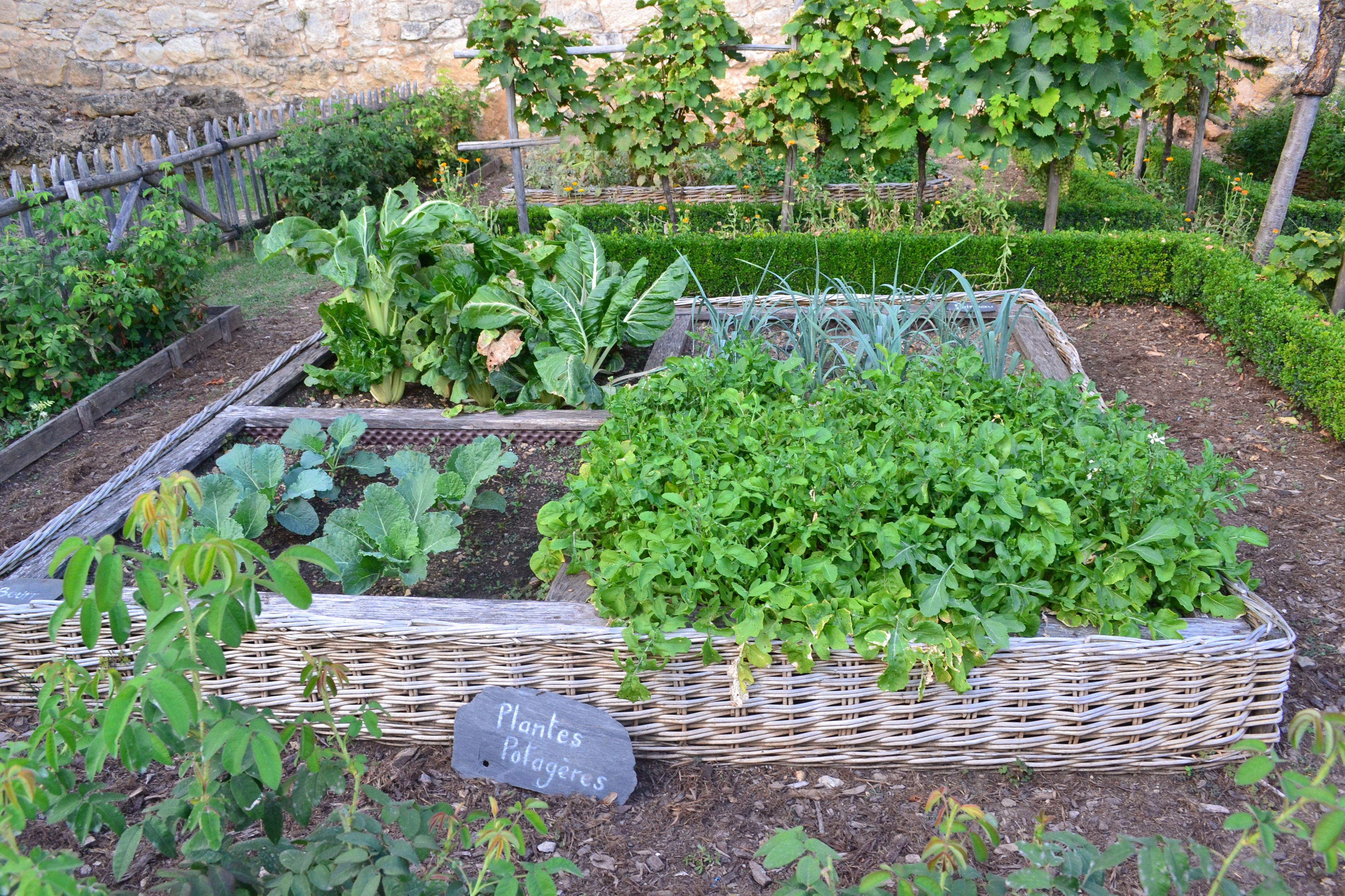 Horta em quintal