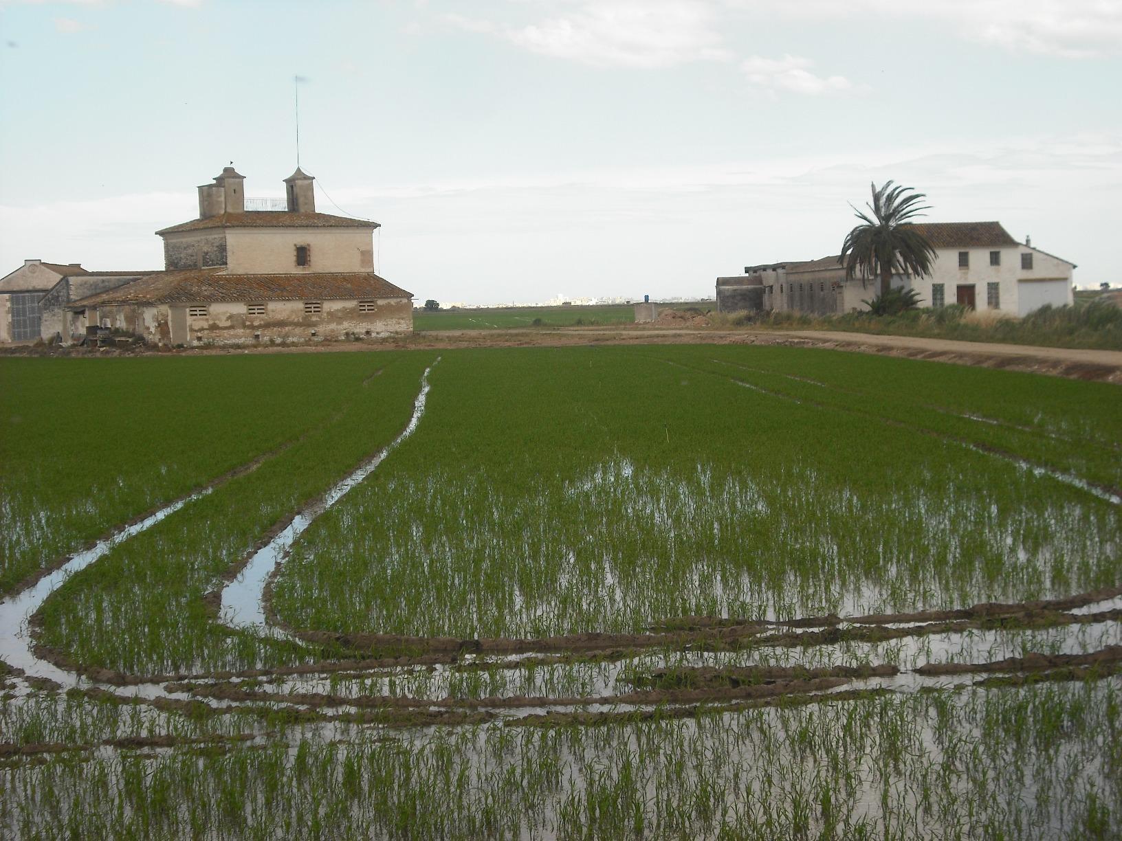 Marjal de La Albufera, Valência, Casa dels Catalans y surcos