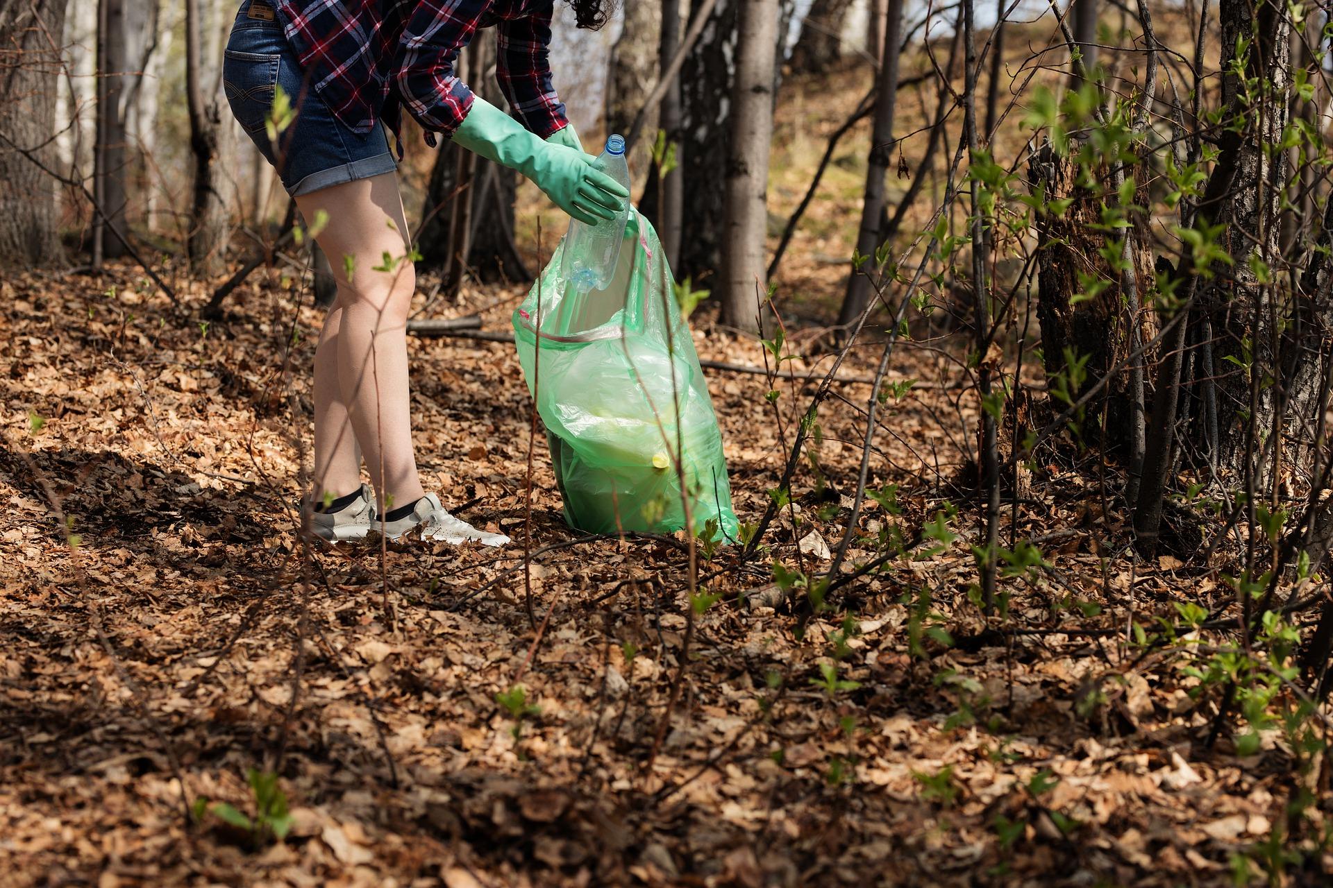 Limpeza da floresta