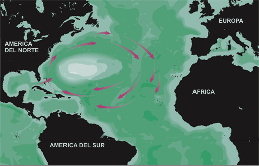 Mar dos Sargaços, Wikimedia Commons